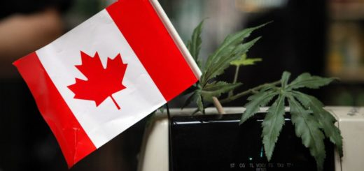 Canada Officially Legalizes Marijuana for Recreational Use